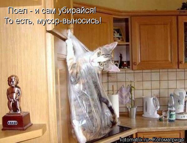 Котоматрица: Поел - и сам убирайся! То есть, мусор-выносись!