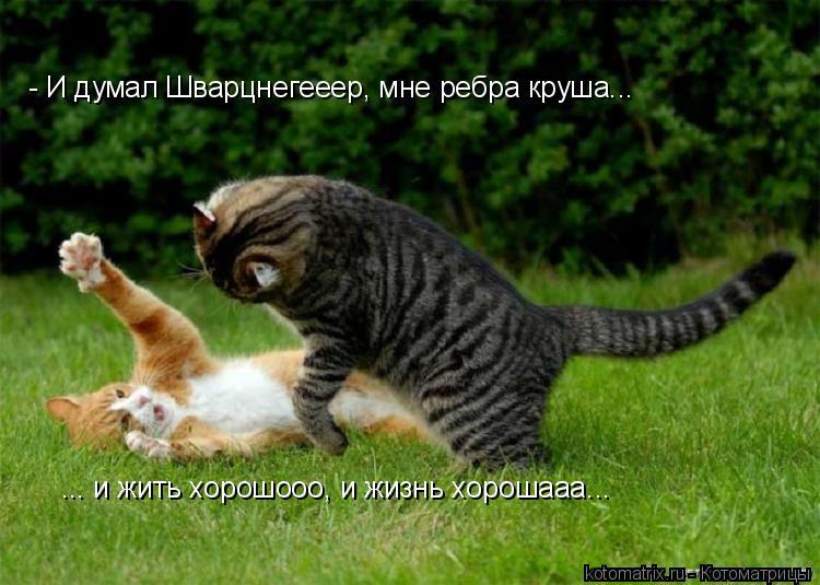 Котоматрица: - И думал Шварцнегееер, мне ребра круша... ... и жить хорошооо, и жизнь хорошааа...