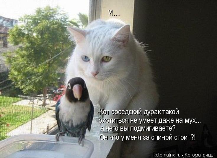 Котоматрица: -Кот соседский дурак такой охотиться не умеет даже на мух... а чего вы подмигиваете? Он что у меня за спиной стоит?! ?!....