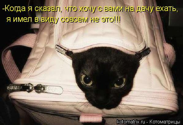Котоматрица: -Когда я сказал, что хочу с вами на дачу ехать, я имел в виду совсем не это!!!