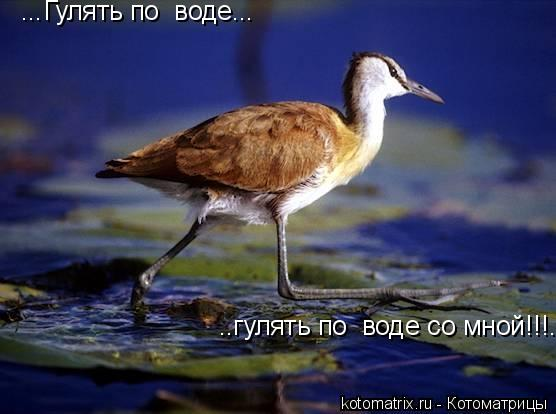 Котоматрица: ...Гулять по  воде... ..гулять по  воде со мной!!!..