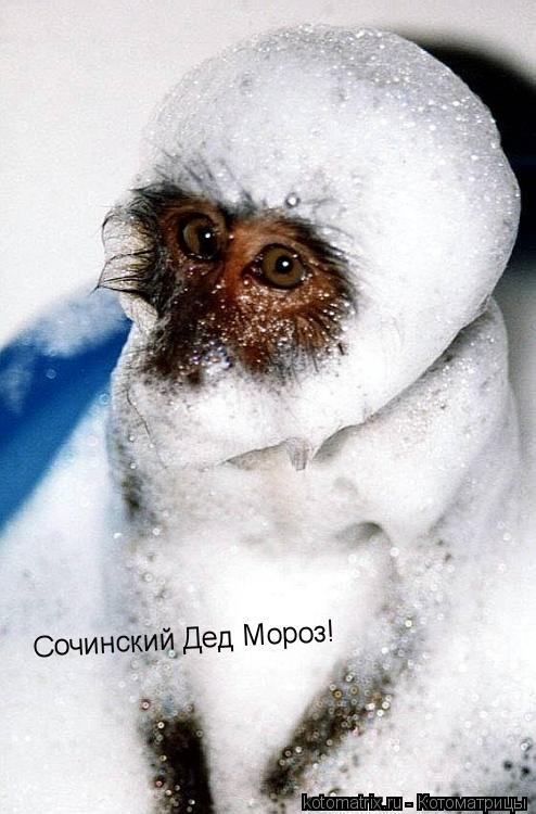 Котоматрица: Сочинский Дед Мороз!
