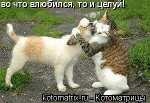 Котоматрица: во что влюбился, то и целуй!