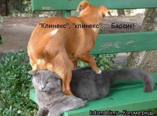 """Котоматрица: """"Клинекс"""", """"клинекс""""...  Барсик!"""