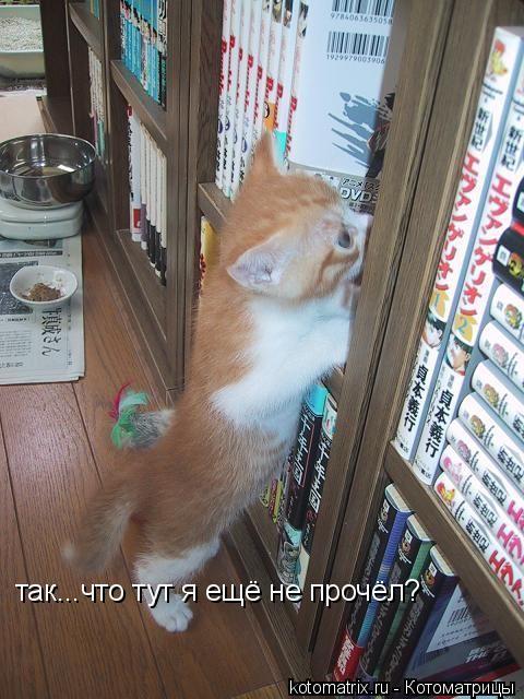Котоматрица: так...что тут я ещё не прочёл?