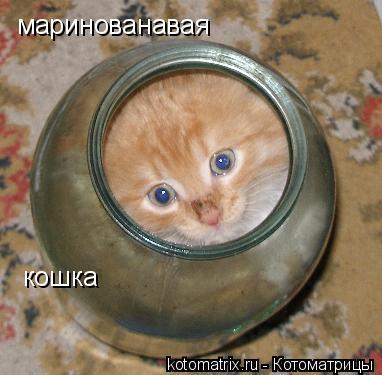 Котоматрица: маринованавая кошка