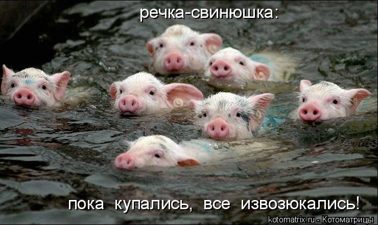 Котоматрица: пока  купались,  все  извозюкались! речка-свинюшка: