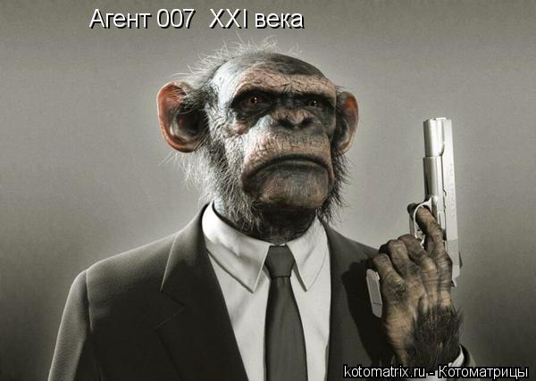 Котоматрица: Агент 007  XXI века