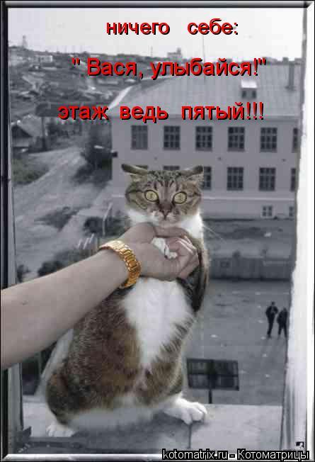 """Котоматрица: """" Вася, улыбайся!"""" этаж  ведь  пятый!!! ничего   себе:"""