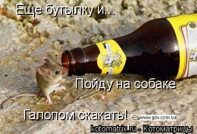 Котоматрица: Еще бутылку и... Пойду на собаке Галопом скакать!