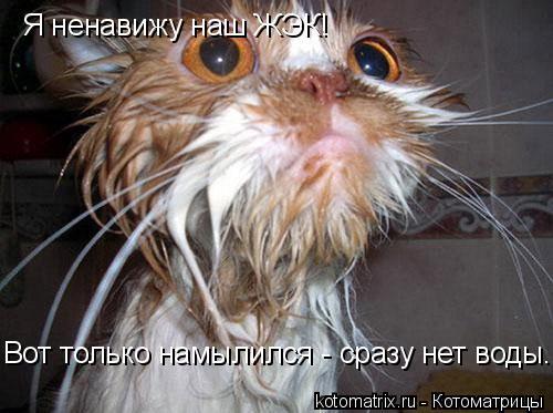 Котоматрица: Я ненавижу наш ЖЭК! Вот только намылился - сразу нет воды.
