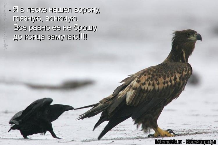 Котоматрица: - Я в песке нашел ворону, грязную, вонючую. Все равно ее не брошу, до конца замучаю!!!!