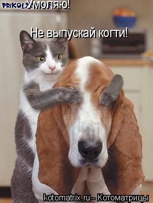 Котоматрица: Умоляю! Не выпускай когти!