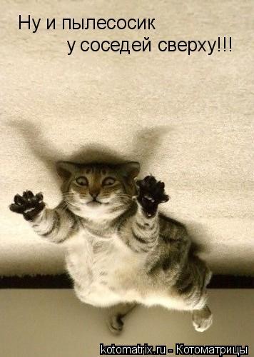 Котоматрица: Ну и пылесосик у соседей сверху!!!