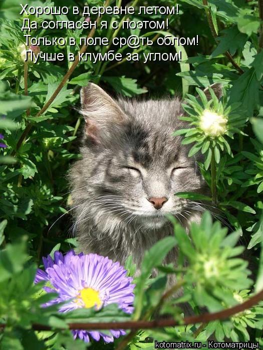 Котоматрица: Хорошо в деревне летом! Да согласен я с поэтом! Только в поле ср@ть облом! Лучше в клумбе за углом!