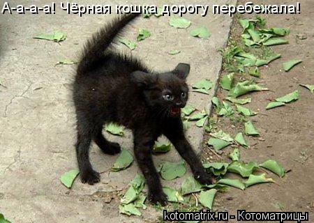 Котоматрица: А-а-а-а! Чёрная кошка дорогу перебежала!