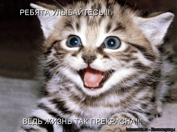 Котоматрица: РЕБЯТА УЛЫБАЙТЕСЬ!!! ВЕДЬ ЖИЗНЬ ТАК ПРЕКРАСНА!!!