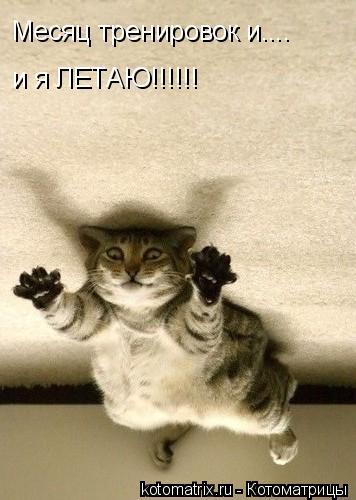Котоматрица: Месяц тренировок и.... и я ЛЕТАЮ!!!!!!