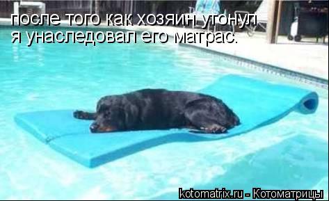 Котоматрица: после того как хозяин утонул я унаследовал его матрас.
