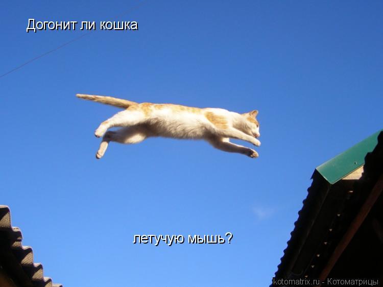 Котоматрица: Догонит ли кошка летучую мышь?