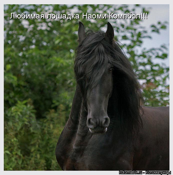 Котоматрица: Любимая лошадка Наоми Кэмпбэл!!!