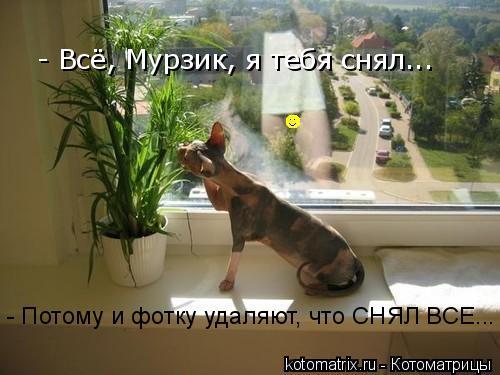 Котоматрица: - Всё, Мурзик, я тебя снял... - Потому и фотку удаляют, что СНЯЛ ВСЕ...