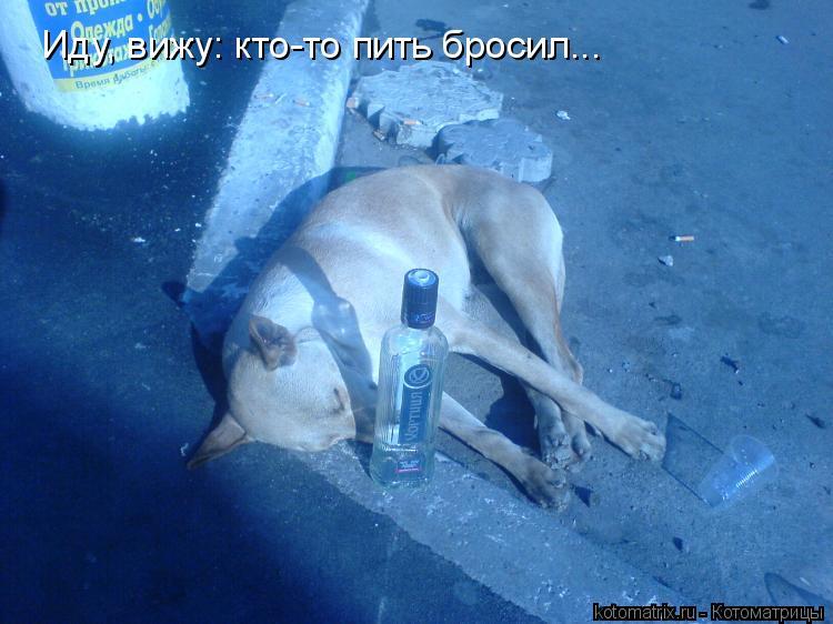 Котоматрица: Иду, вижу: кто-то пить бросил...