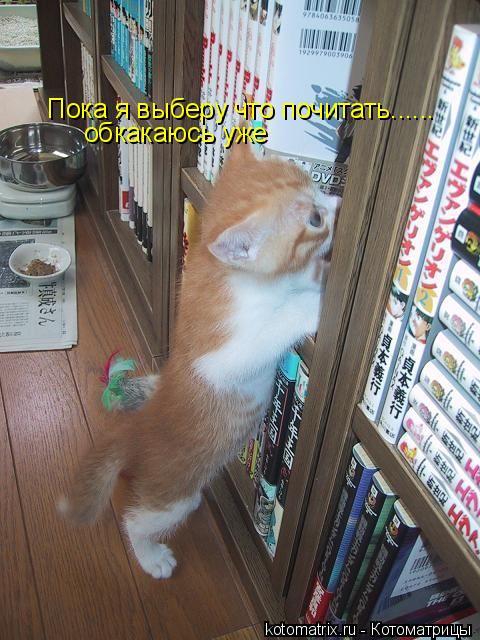 Котоматрица: Пока я выберу что почитать...... обкакаюсь уже