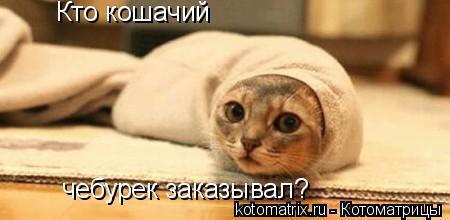 Котоматрица: Кто кошачий чебурек заказывал?
