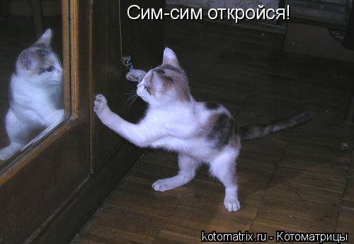 Котоматрица: Сим-сим откройся!