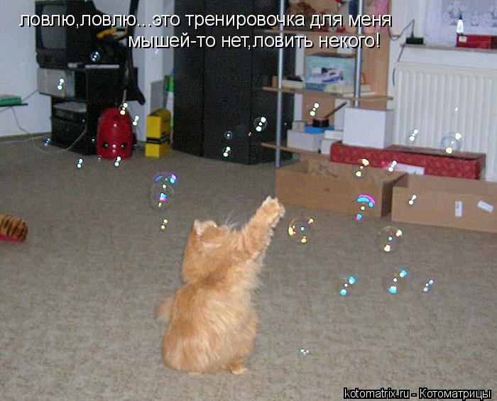 Котоматрица: ловлю,ловлю...это тренировочка для меня мышей-то нет,ловить некого!