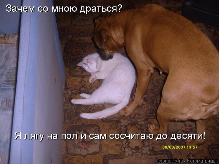Котоматрица: Зачем со мною драться?  Я лягу на пол и сам сосчитаю до десяти!