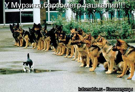 Котоматрица: У Мурзика,барзометр зашкалил!!!