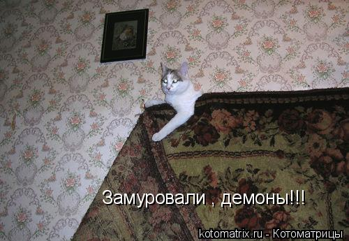 Котоматрица: Замуровали , демоны!!!