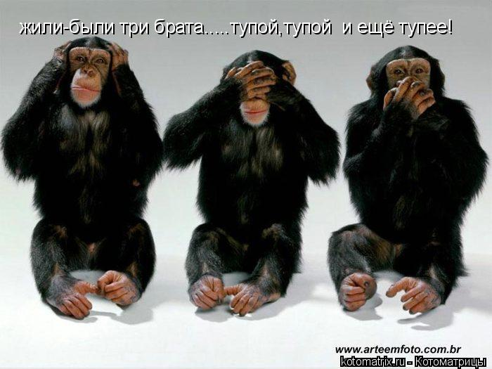 Котоматрица: жили-были три брата.....тупой,тупой  и ещё тупее!