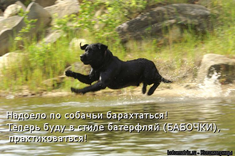 Котоматрица: Надоело по собачьи барахтаться! Теперь буду в стиле батерфляй (БАБОЧКИ), практиковаться!