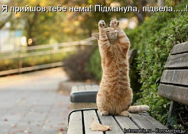 Котоматрица: Я прийшов,тебе нема! Пiдманула, пiдвела.....!!!!