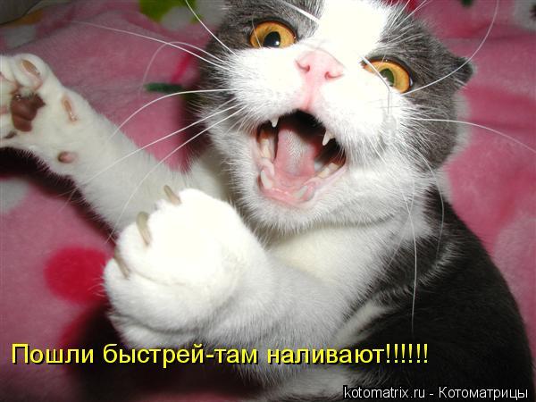 Котоматрица: Пошли быстрей-там наливают!!!!!!