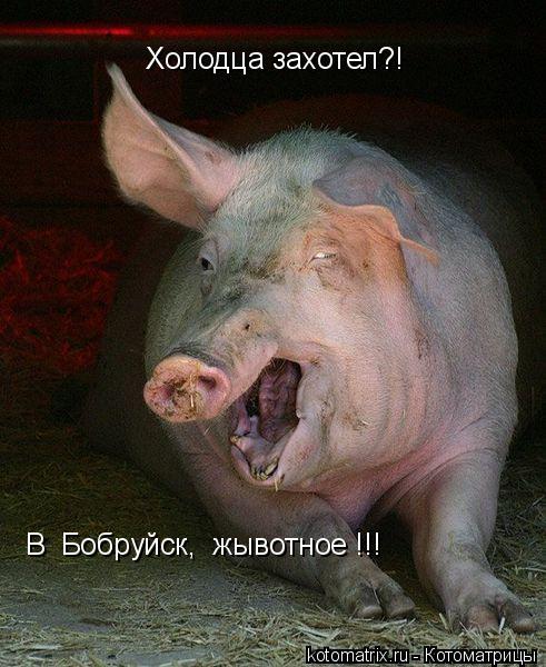Котоматрица: Холодца захотел?! В  Бобруйск,  жывотное !!!