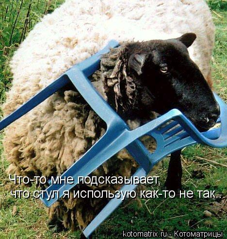 Котоматрица: Что-то мне подсказывает, что стул я использую как-то не так...