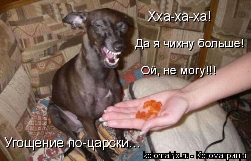Котоматрица: Хха-ха-ха! Да я чихну больше! Ой, не могу!!! Угощение по-царски...