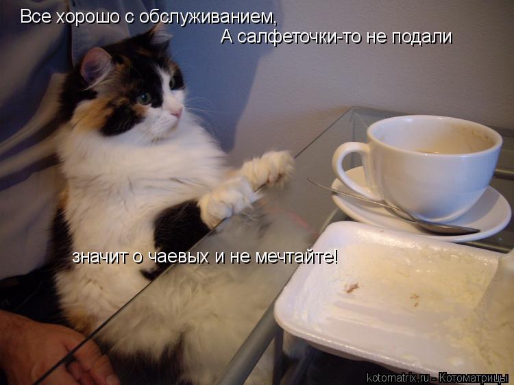 Котоматрица: Все хорошо с обслуживанием, А салфеточки-то не подали значит о чаевых и не мечтайте!