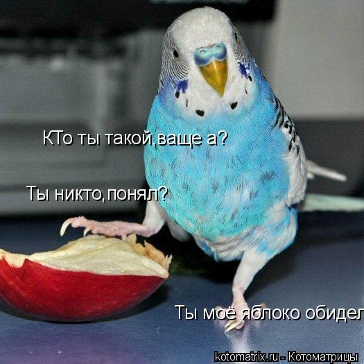 Котоматрица: КТо ты такой,ваще а? Ты никто,понял? Ты моё яблоко обидел!