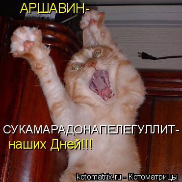 Котоматрица: АРШАВИН- наших Дней!!!  СУКАМАРАДОНАПЕЛЕГУЛЛИТ-