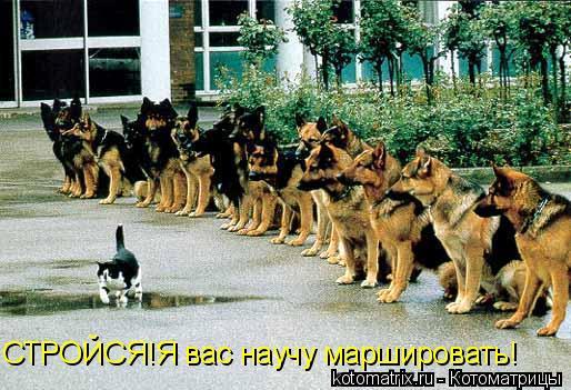 Котоматрица: СТРОЙСЯ!Я вас научу маршировать!