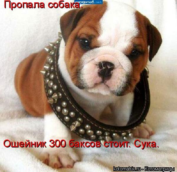 Котоматрица: Пропала собака.  Ошейник 300 баксов стоит. Сука.