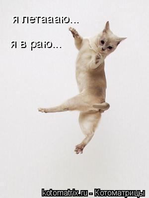 Котоматрица: я летаааю... я в раю...