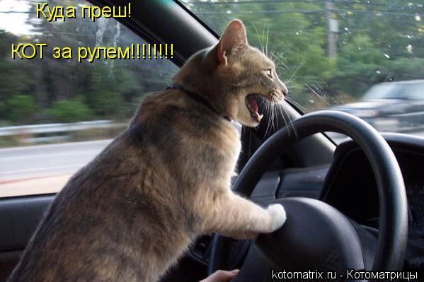 Котоматрица: Куда преш! КОТ за рулем!!!!!!!!