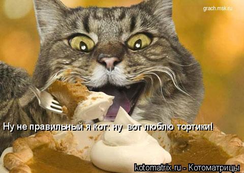 Котоматрица: Ну не правильный я кот: ну  вот люблю тортики!