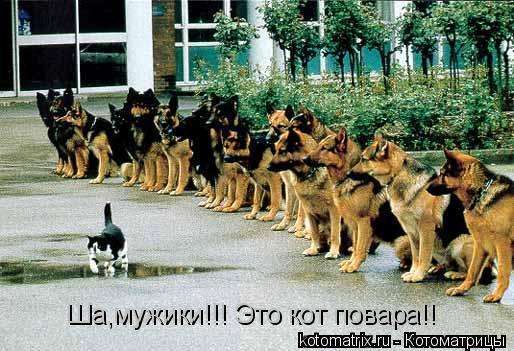 Котоматрица: Ша,мужики!!! Это кот повара!!